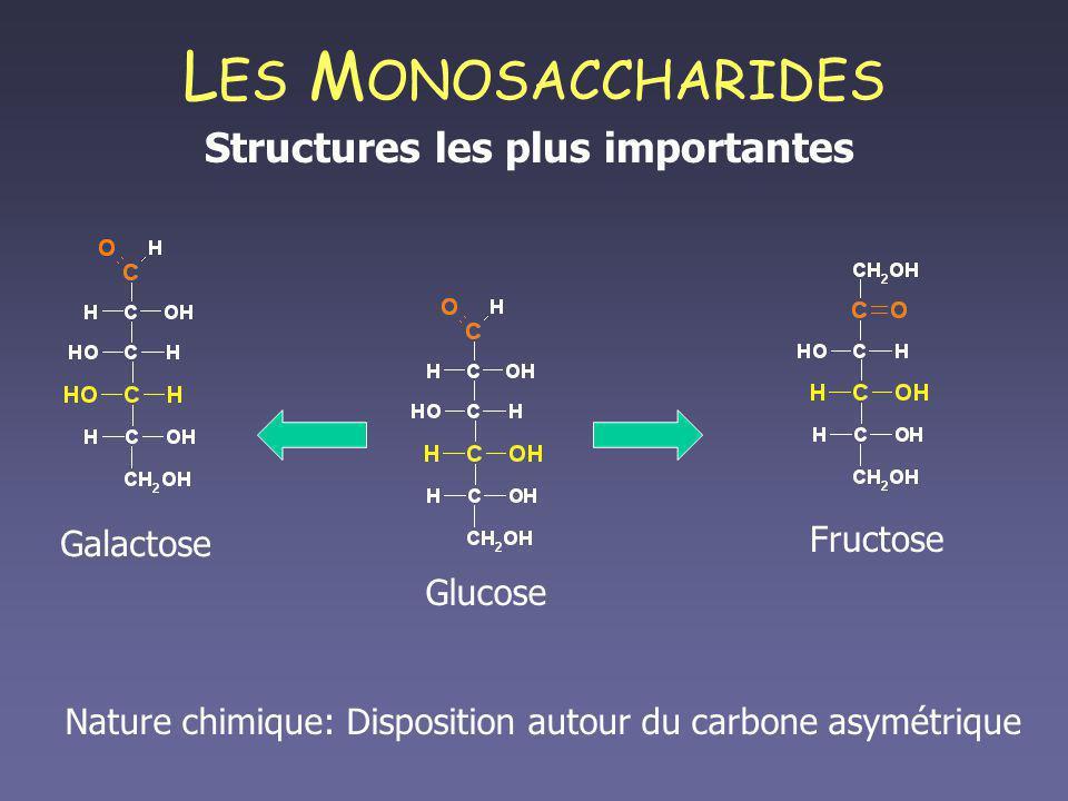 L ES M ONOSACCHARIDES Structures les plus importantes Fructose Nature chimique: Disposition autour du carbone asymétrique Glucose Galactose