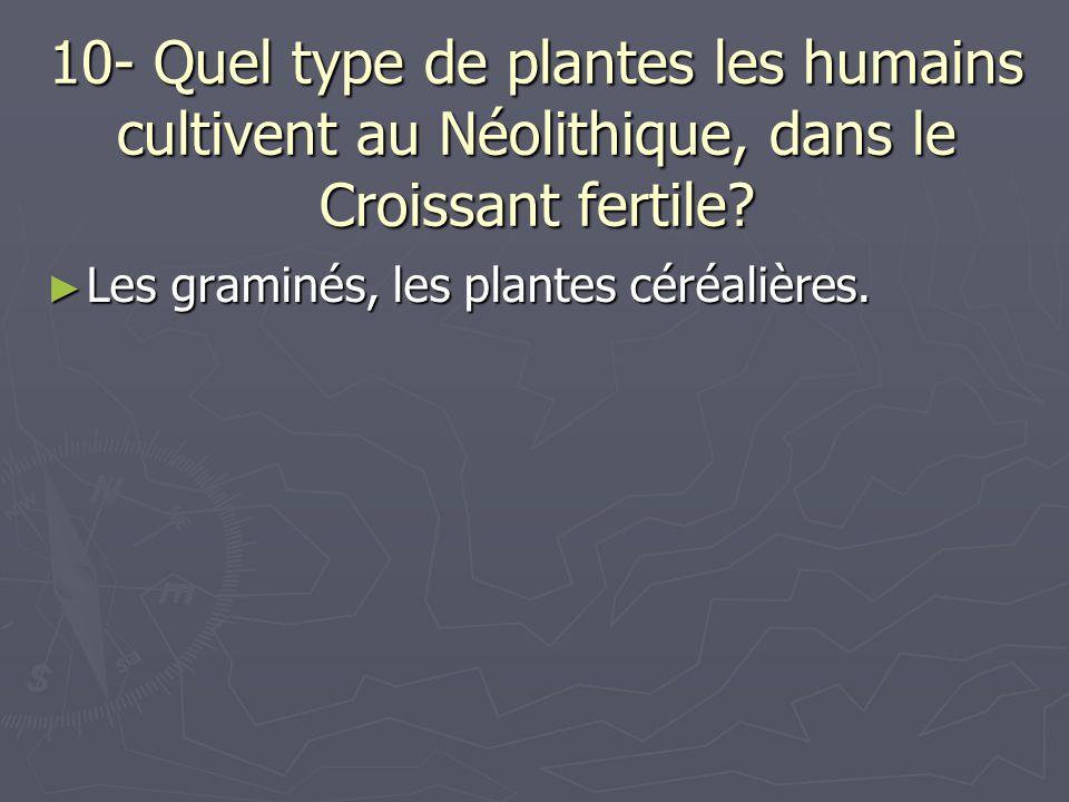 10- Quel type de plantes les humains cultivent au Néolithique, dans le Croissant fertile? Les graminés, les plantes céréalières. Les graminés, les pla