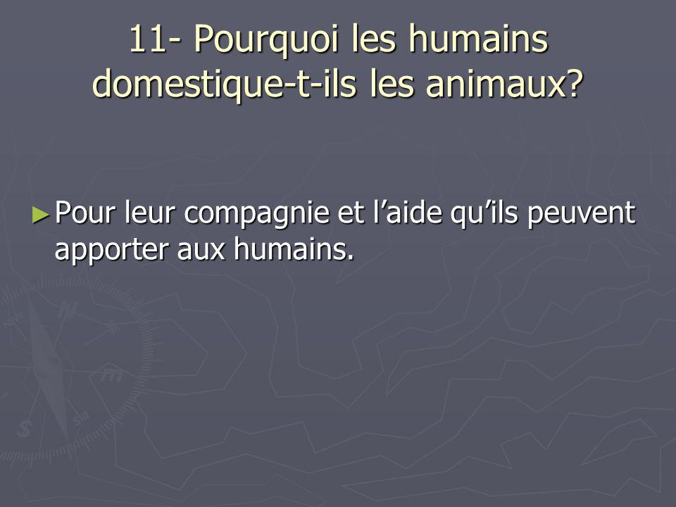 11- Pourquoi les humains domestique-t-ils les animaux? Pour leur compagnie et laide quils peuvent apporter aux humains. Pour leur compagnie et laide q