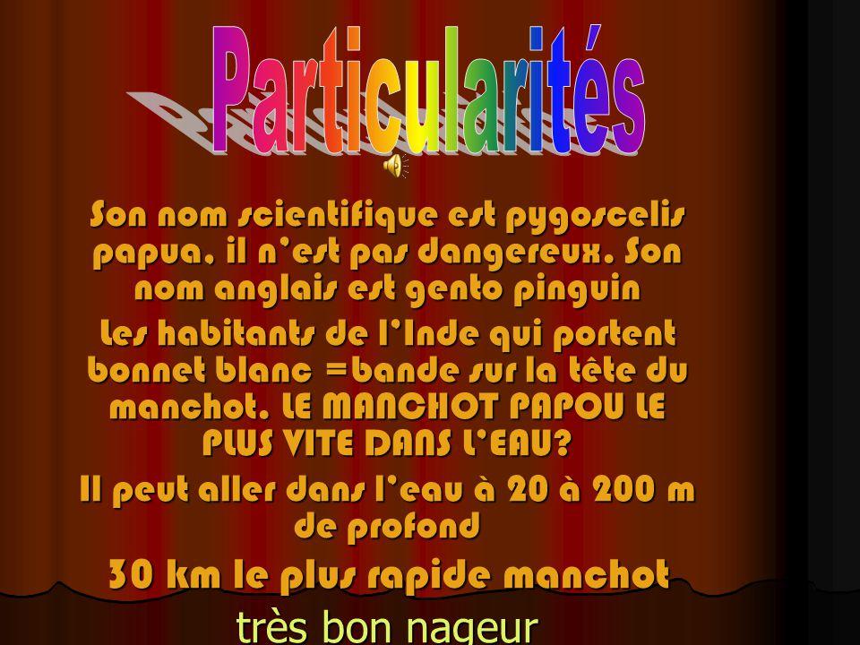 Son nom scientifique est pygoscelis papua, il nest pas dangereux.