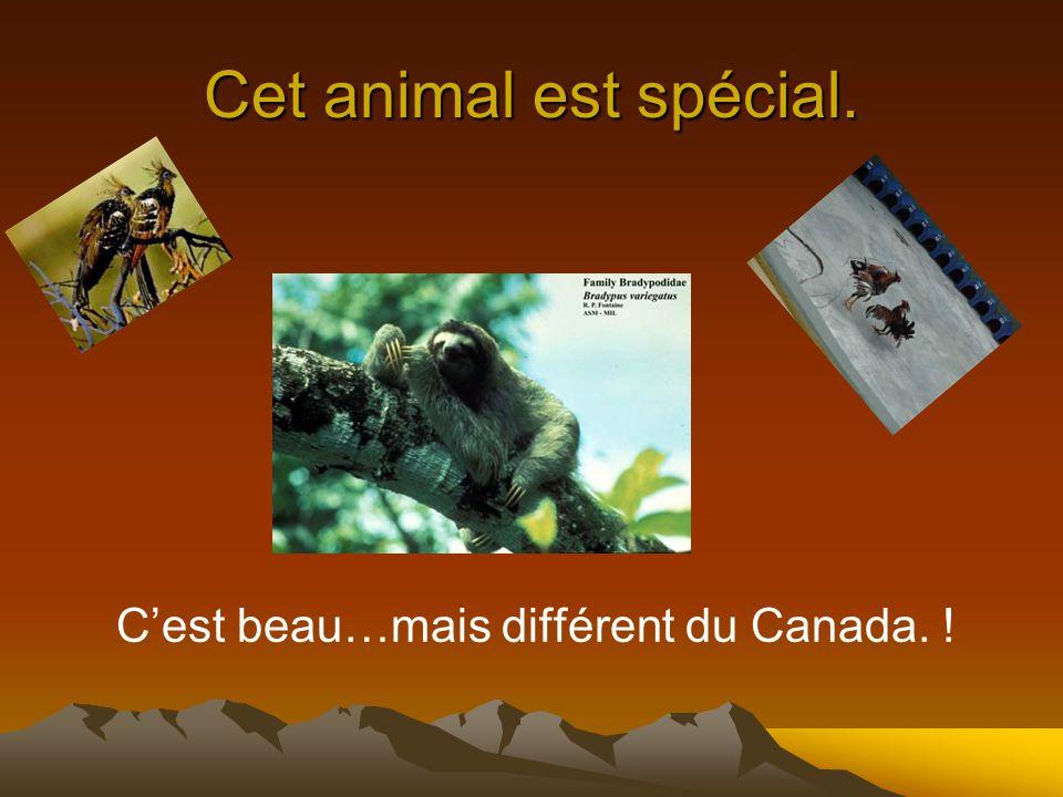Cet animal est spécial. Cest beau…mais différent du Canada. !