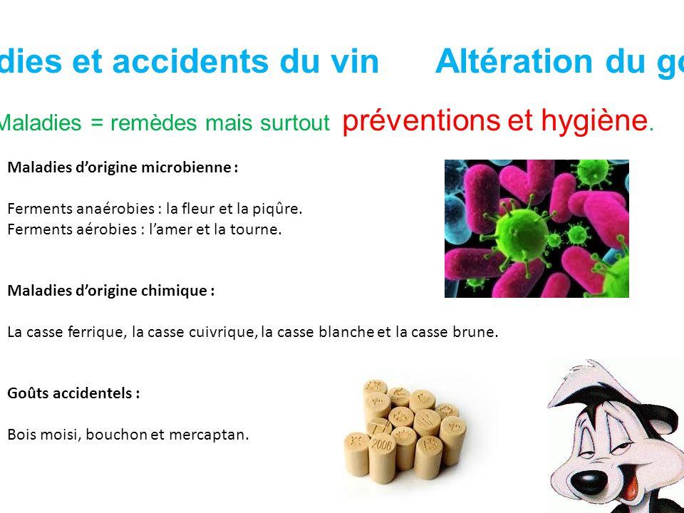 Maladies et accidents du vin Altération du goût Maladies = remèdes mais surtout préventions et hygiène. Maladies dorigine microbienne : Ferments anaér