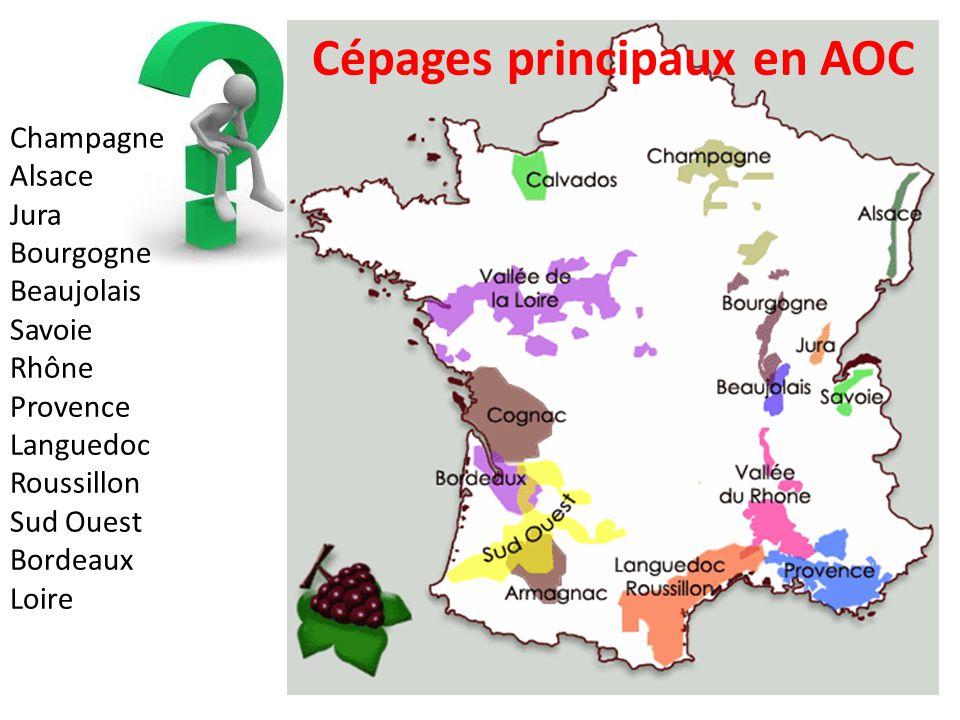 Cépages principaux en AOC Champagne Alsace Jura Bourgogne Beaujolais Savoie Rhône Provence Languedoc Roussillon Sud Ouest Bordeaux Loire