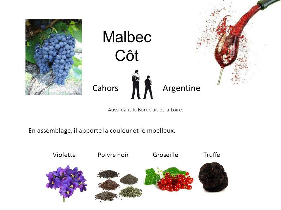 Malbec Côt Cahors Argentine Aussi dans le Bordelais et la Loire. En assemblage, il apporte la couleur et le moelleux. Violette Poivre noir Groseille T