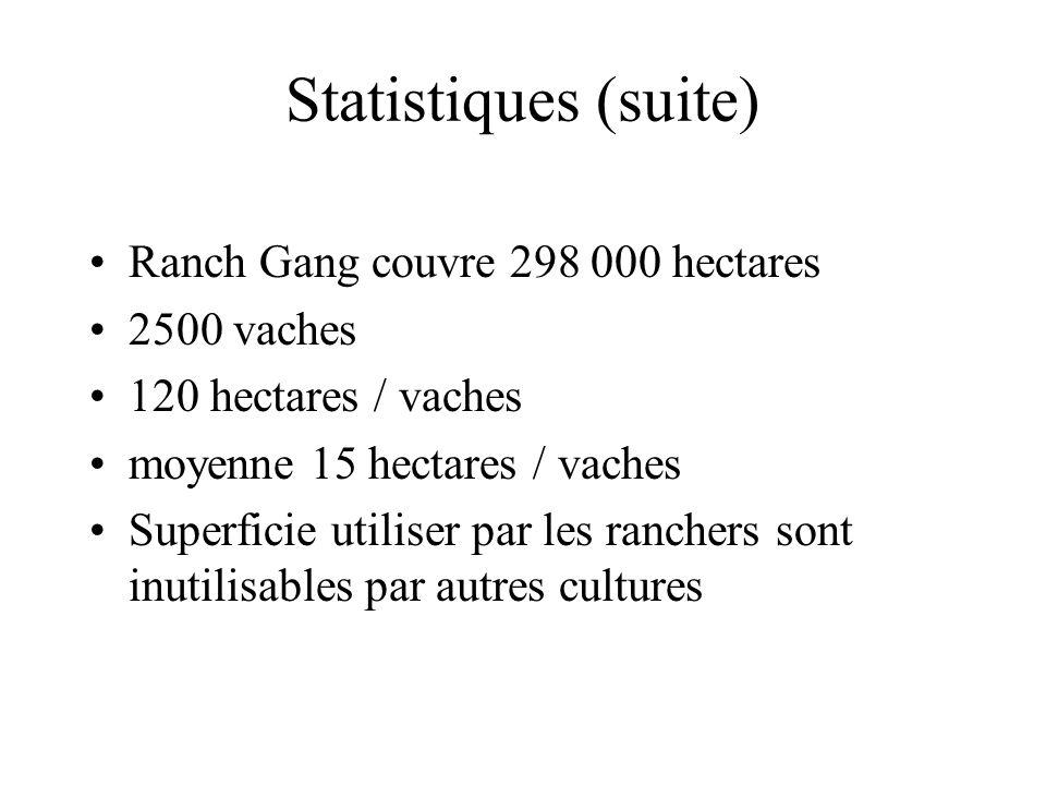 Statistiques (suite) Ranch Gang couvre 298 000 hectares 2500 vaches 120 hectares / vaches moyenne 15 hectares / vaches Superficie utiliser par les ranchers sont inutilisables par autres cultures