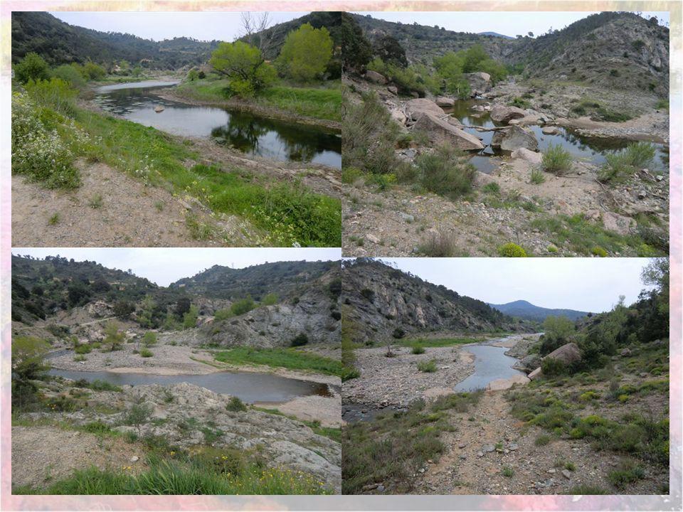 Catastrophe de Malpasset Durant les cinq années qui précèdent le sinistre, le lac du barrage ne peut se remplir totalement en raison du manque de plui