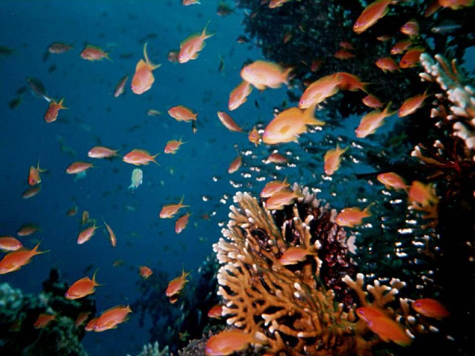 Soyez les bienvenus dans le monde sous-marin Le monde du silence Mais aussi celui des couleurs