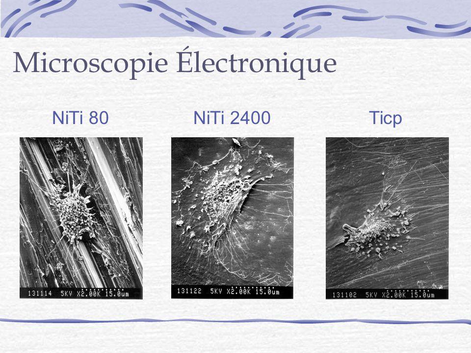 Microscopie Électronique NiTi 80NiTi 2400Ticp
