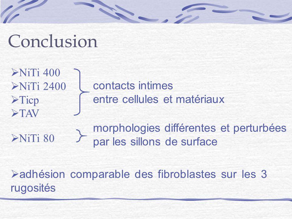 Conclusion adhésion comparable des fibroblastes sur les 3 rugosités NiTi 400 NiTi 2400 Ticp TAV contacts intimes entre cellules et matériaux NiTi 80 morphologies différentes et perturbées par les sillons de surface