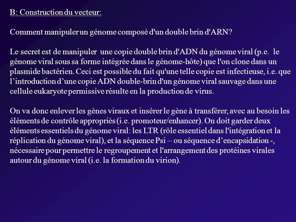 B: Construction du vecteur: Comment manipuler un génome composé d un double brin d ARN.