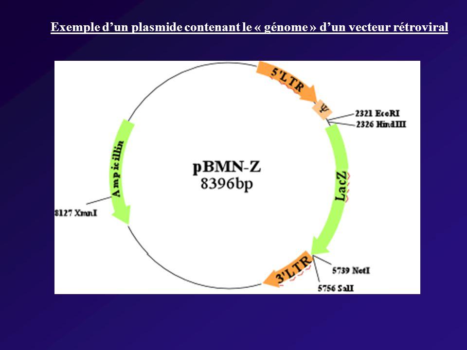 Exemple dun plasmide contenant le « génome » dun vecteur rétroviral