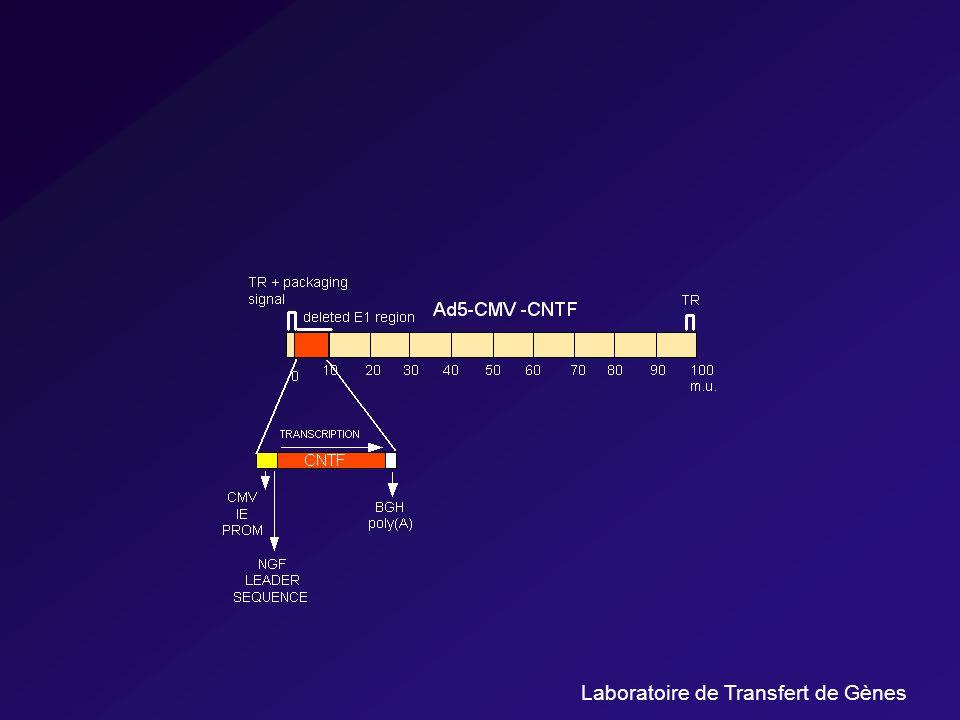 Laboratoire de Transfert de Gènes