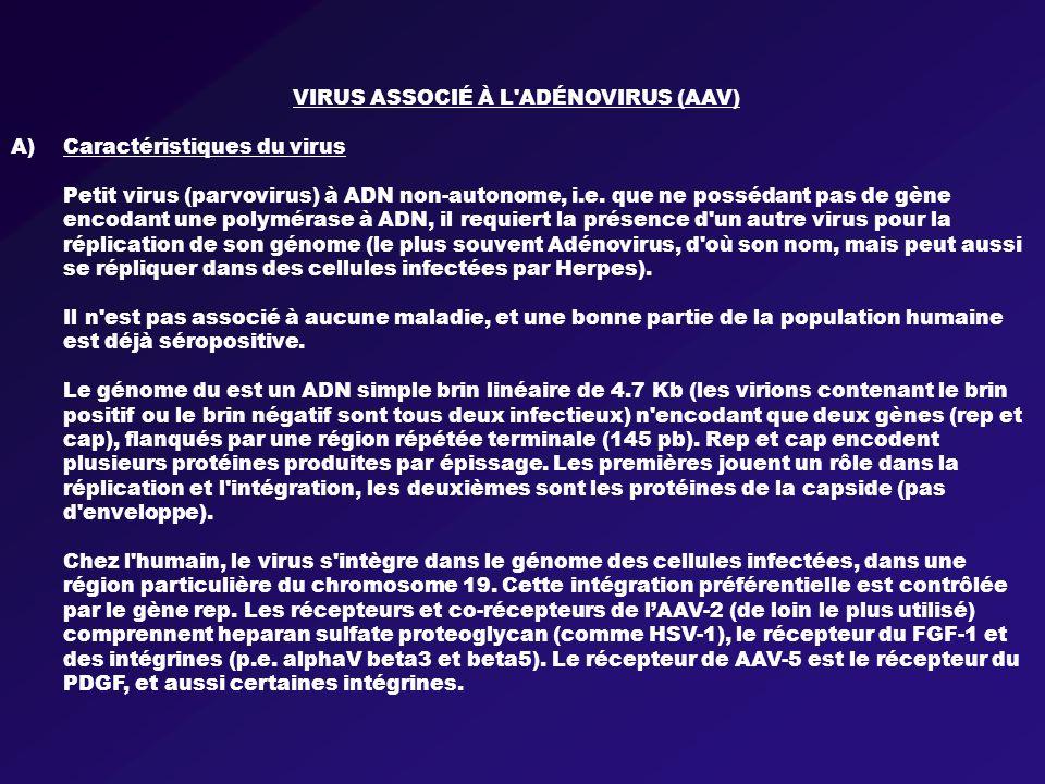 VIRUS ASSOCIÉ À L ADÉNOVIRUS (AAV) A)Caractéristiques du virus Petit virus (parvovirus) à ADN non-autonome, i.e.