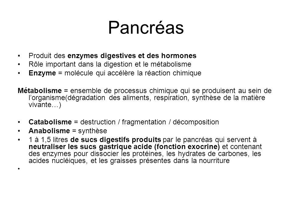 Pancréas Produit des enzymes digestives et des hormones Rôle important dans la digestion et le métabolisme Enzyme = molécule qui accélère la réaction chimique Métabolisme = ensemble de processus chimique qui se produisent au sein de lorganisme(dégradation des aliments, respiration, synthèse de la matière vivante…) Catabolisme = destruction / fragmentation / décomposition Anabolisme = synthèse 1 à 1,5 litres de sucs digestifs produits par le pancréas qui servent à neutraliser les sucs gastrique acide (fonction exocrine) et contenant des enzymes pour dissocier les protéines, les hydrates de carbones, les acides nucléiques, et les graisses présentes dans la nourriture