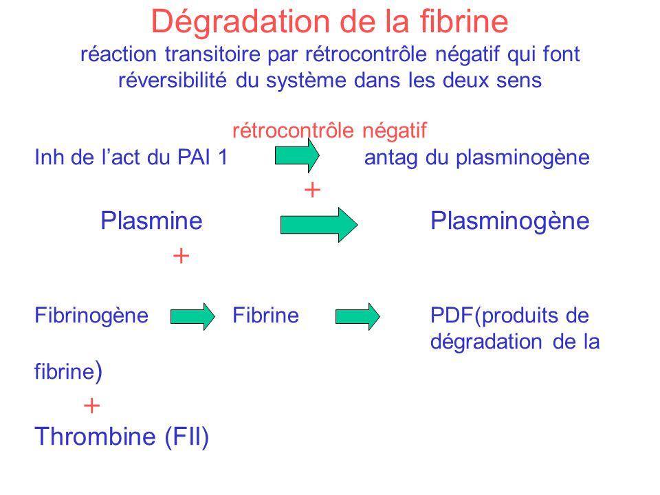 Dégradation de la fibrine réaction transitoire par rétrocontrôle négatif qui font réversibilité du système dans les deux sens rétrocontrôle négatif In