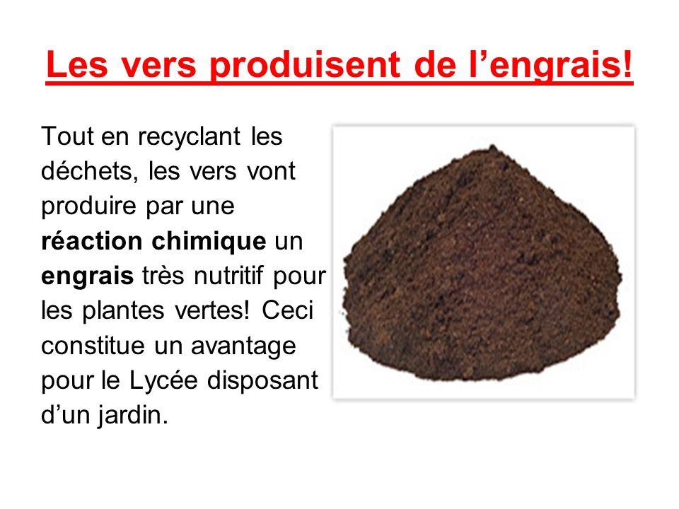 Les vers produisent de lengrais! Tout en recyclant les déchets, les vers vont produire par une réaction chimique un engrais très nutritif pour les pla