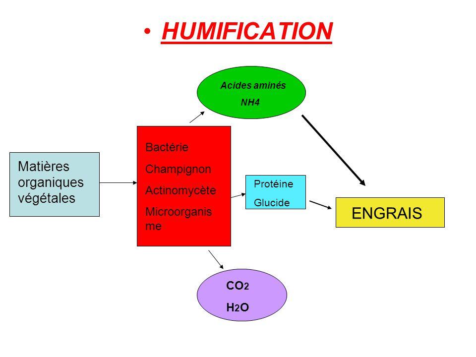 HUMIFICATION Matières organiques végétales Bactérie Champignon Actinomycète Microorganis me Acides aminés NH4 CO 2 H 2 O Protéine Glucide ENGRAIS