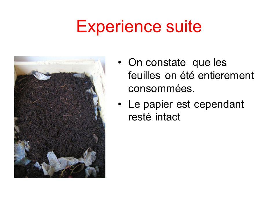 Experience suite On constate que les feuilles on été entierement consommées. Le papier est cependant resté intact