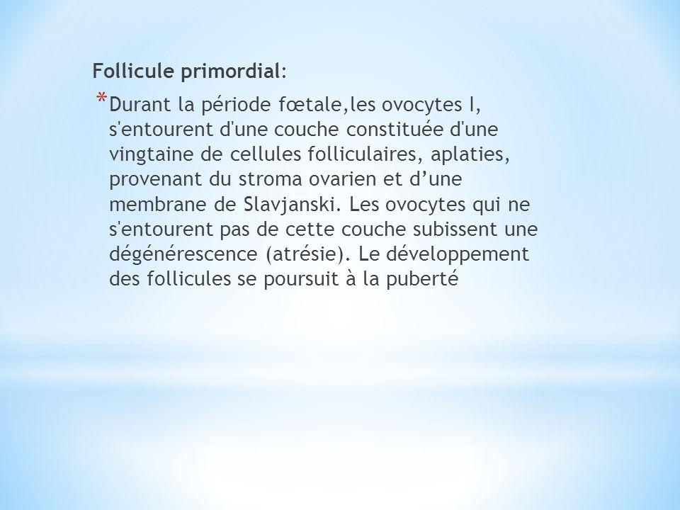 Follicule primordial: * Durant la période fœtale,les ovocytes I, s'entourent d'une couche constituée d'une vingtaine de cellules folliculaires, aplati