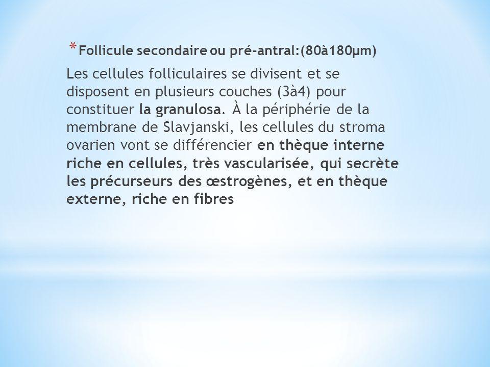 * Follicule secondaire ou pré-antral:(80à180µm) Les cellules folliculaires se divisent et se disposent en plusieurs couches (3à4) pour constituer la g