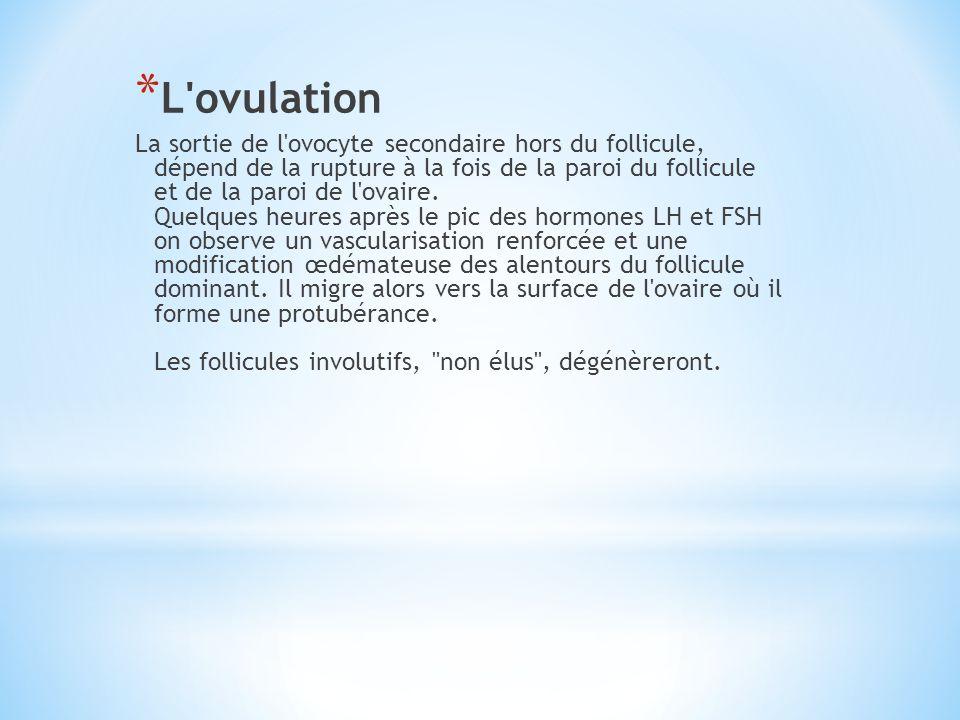 * L'ovulation La sortie de l'ovocyte secondaire hors du follicule, dépend de la rupture à la fois de la paroi du follicule et de la paroi de l'ovaire.