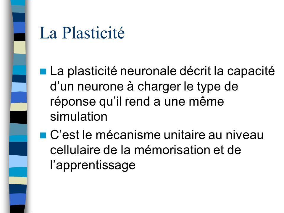 La Plasticité La plasticité neuronale décrit la capacité dun neurone à charger le type de réponse quil rend a une même simulation Cest le mécanisme unitaire au niveau cellulaire de la mémorisation et de lapprentissage
