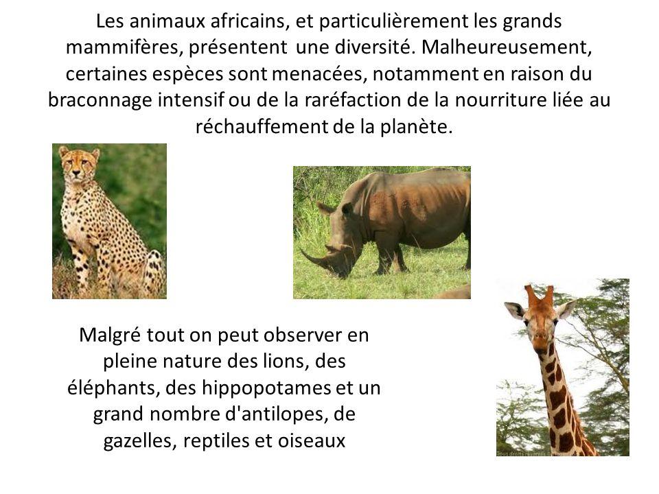 Les animaux africains, et particulièrement les grands mammifères, présentent une diversité. Malheureusement, certaines espèces sont menacées, notammen