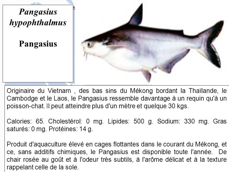 Originaire du Vietnam, des bas sins du Mékong bordant la Thaïlande, le Cambodge et le Laos, le Pangasius ressemble davantage à un requin qu à un poisson-chat.