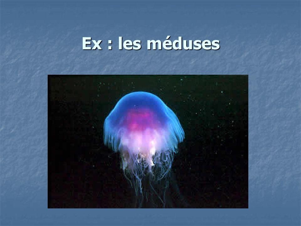 Ex : les méduses