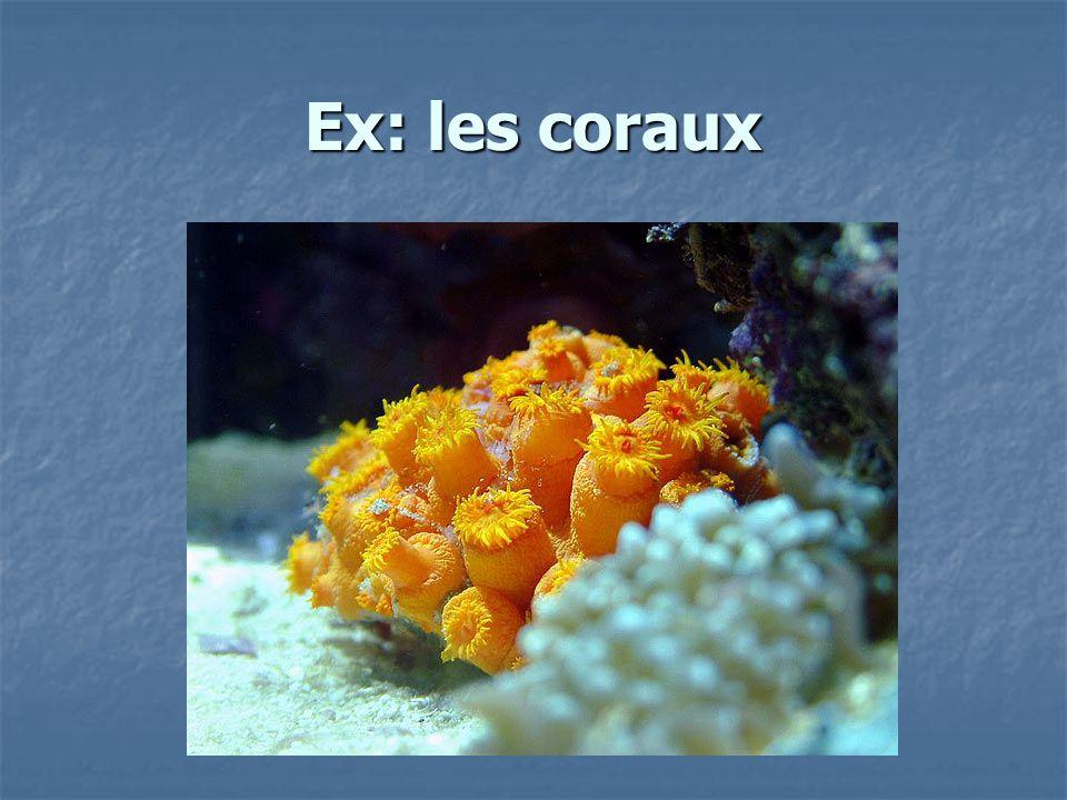 Ex: les coraux