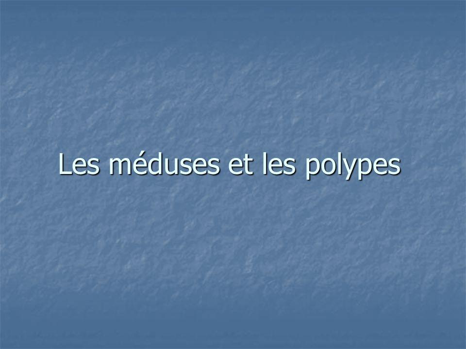 Les méduses et les polypes