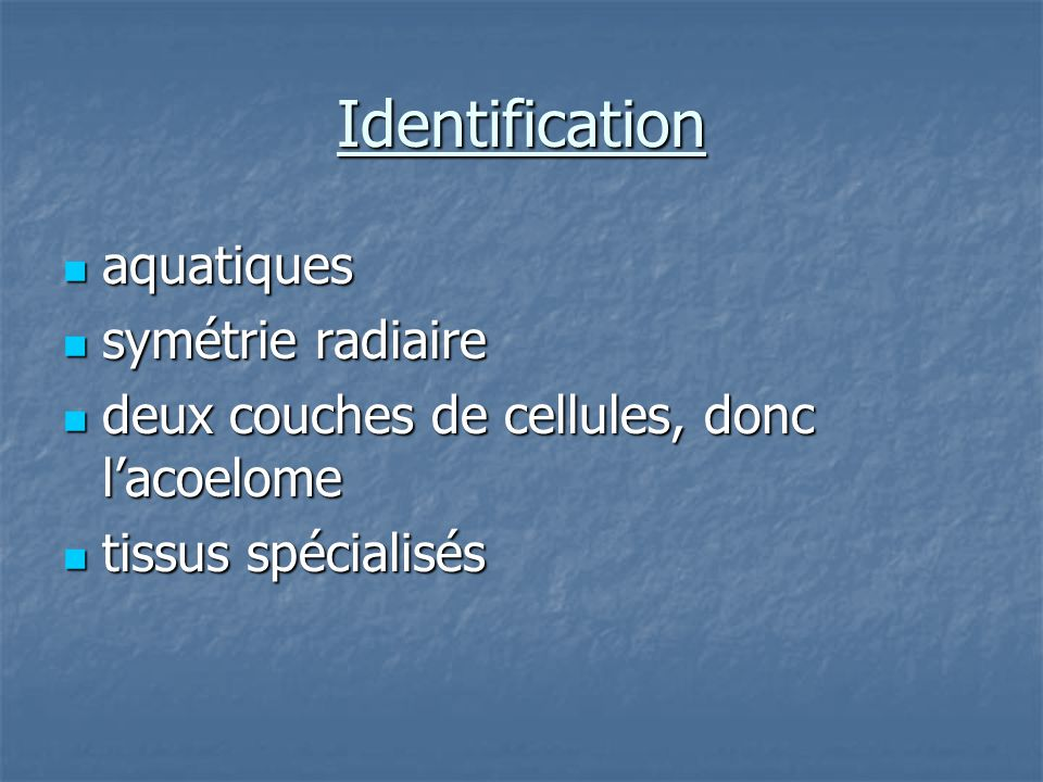 Identification cont… Les polypes: sessiles, tubulaires, tentacules.