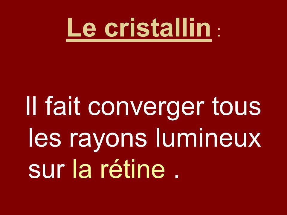 Le cristallin : Il fait converger tous les rayons lumineux sur la rétine.