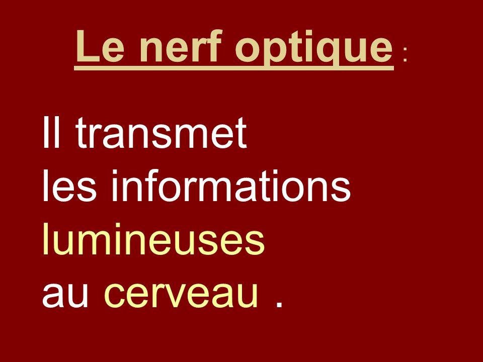Le nerf optique : Il transmet les informations lumineuses au cerveau.