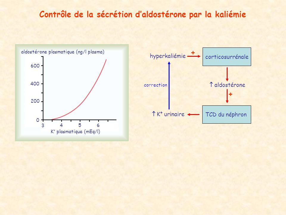 Contrôle de la sécrétion daldostérone par la kaliémie 3 456 K + plasmatique (mEq/l) aldostérone plasmatique (ng/l plasma) 0 200 400 600 hyperkaliémie