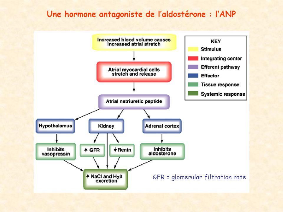 Une hormone antagoniste de laldostérone : lANP GFR = glomerular filtration rate