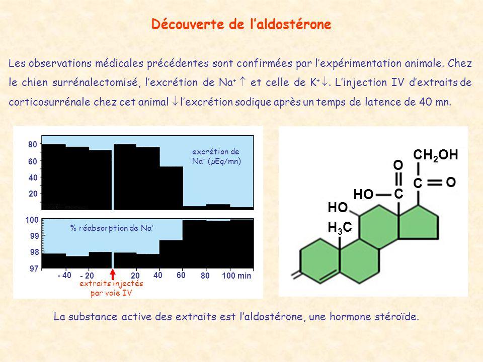Contrôle de la sécrétion daldostérone par la kaliémie 3 456 K + plasmatique (mEq/l) aldostérone plasmatique (ng/l plasma) 0 200 400 600 hyperkaliémie corticosurrénale aldostérone TCD du néphron K + urinaire correction + +