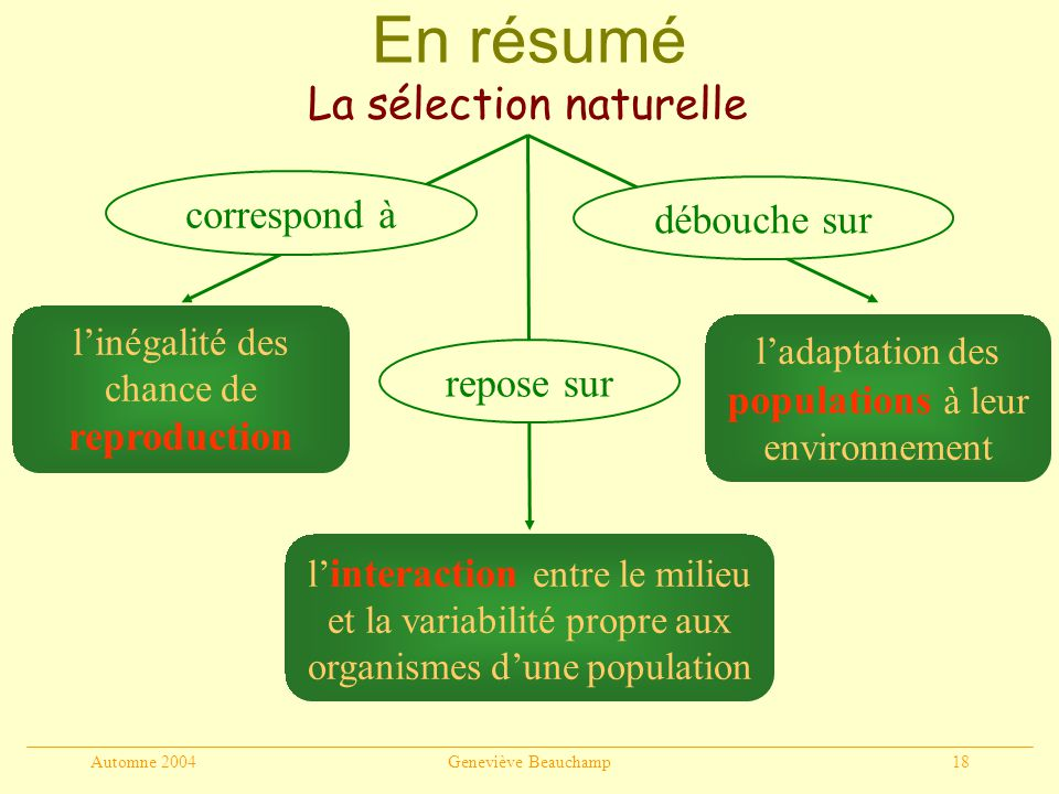 Automne 2004Geneviève Beauchamp18 En résumé La sélection naturelle linégalité des chance de reproduction l interaction entre le milieu et la variabili