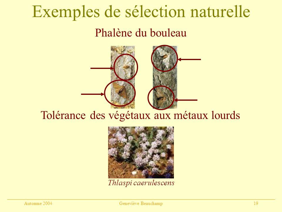 Automne 2004Geneviève Beauchamp19 Exemples de sélection naturelle Phalène du bouleau Tolérance des végétaux aux métaux lourds Thlaspi caerulescens