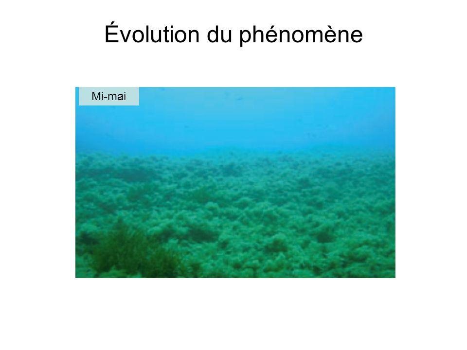 Causes possibles du mucilage 1.Variation du ratio N:P (Fajon et al, 1999) et du flux de nutriments (Giani et al 2005) 2.Diminution de lactivité de dégradation des bactéries (Pompei et al, 2003) 3.Stratification du milieu (température, masse volumique) (Giani et al, 2005) 4.Changement dans lhydrodynamisme en synergie avec des conditions météorologiques particulières (Giani et al, 2005)