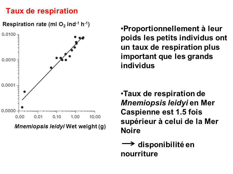 Taux de respiration Respiration rate (ml O 2 ind -1 h -1 ) Mnemiopsis leidyi Wet weight (g) Proportionnellement à leur poids les petits individus ont un taux de respiration plus important que les grands individus Taux de respiration de Mnemiopsis leidyi en Mer Caspienne est 1.5 fois supérieur à celui de la Mer Noire disponibilité en nourriture