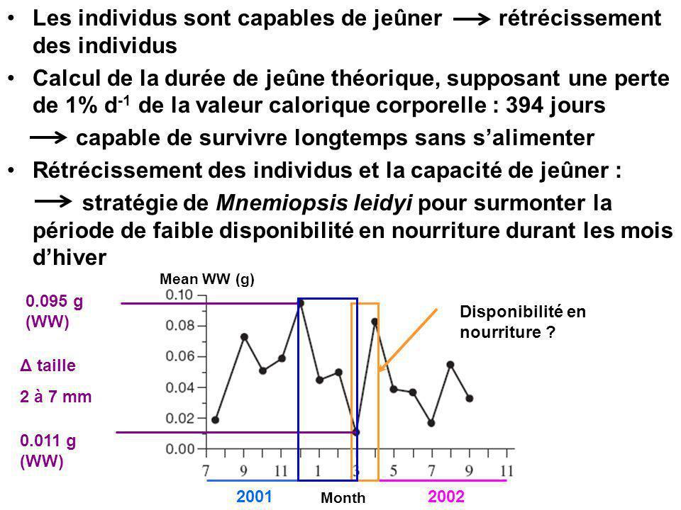 Les individus sont capables de jeûner rétrécissement des individus Calcul de la durée de jeûne théorique, supposant une perte de 1% d -1 de la valeur calorique corporelle : 394 jours capable de survivre longtemps sans salimenter Rétrécissement des individus et la capacité de jeûner : stratégie de Mnemiopsis leidyi pour surmonter la période de faible disponibilité en nourriture durant les mois dhiver Mean WW (g) Month 20012002 Disponibilité en nourriture .