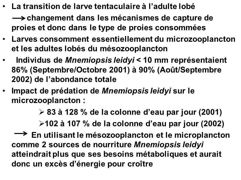 La transition de larve tentaculaire à ladulte lobé changement dans les mécanismes de capture de proies et donc dans le type de proies consommées Larves consomment essentiellement du microzooplancton et les adultes lobés du mésozooplancton Individus de Mnemiopsis leidyi < 10 mm représentaient 86% (Septembre/Octobre 2001) à 90% (Août/Septembre 2002) de labondance totale Impact de prédation de Mnemiopsis leidyi sur le microzooplancton : 83 à 128 % de la colonne deau par jour (2001) 102 à 107 % de la colonne deau par jour (2002) En utilisant le mésozooplancton et le microplancton comme 2 sources de nourriture Mnemiopsis leidyi atteindrait plus que ses besoins métaboliques et aurait donc un excès dénergie pour croître
