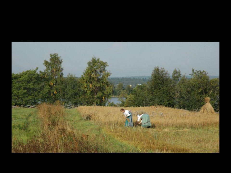 Le rythme tranquille des travaux des champs….