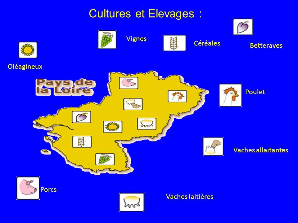 Cultures et Elevages : Poulet Vaches allaitantes Vaches laitières Porcs Oléagineux Vignes Céréales Betteraves