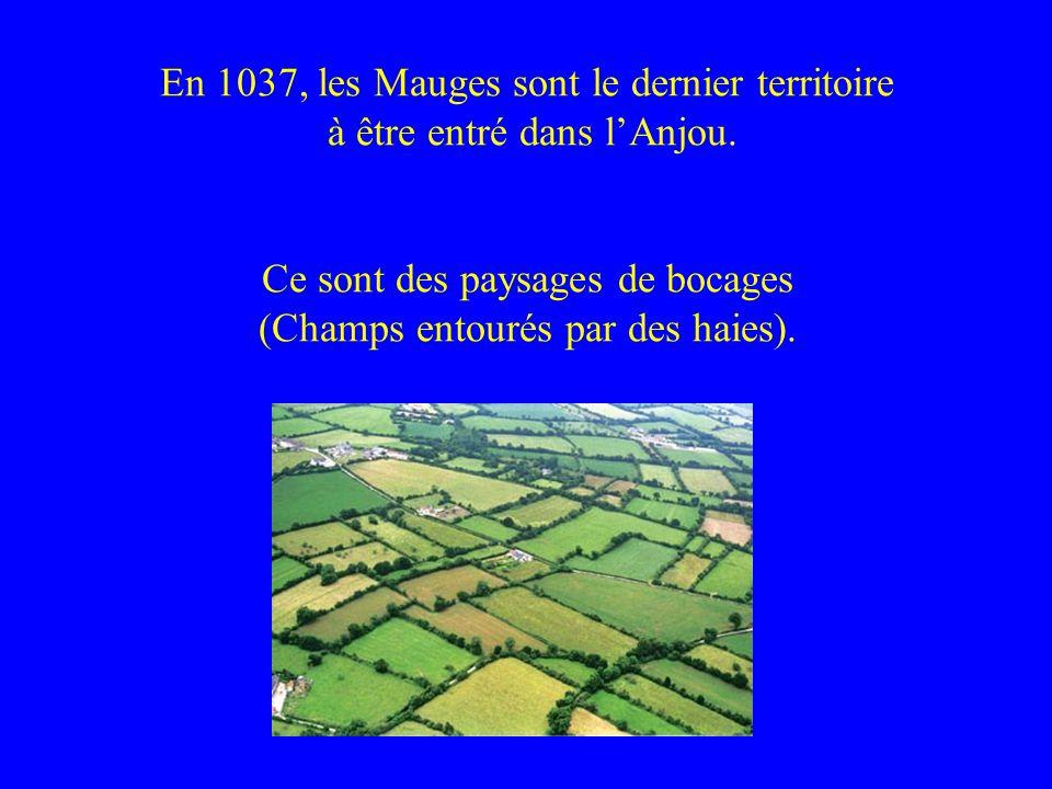 En 1037, les Mauges sont le dernier territoire à être entré dans lAnjou. Ce sont des paysages de bocages (Champs entourés par des haies).