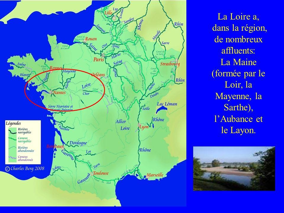 La Loire a, dans la région, de nombreux affluents: La Maine (formée par le Loir, la Mayenne, la Sarthe), lAubance et le Layon.