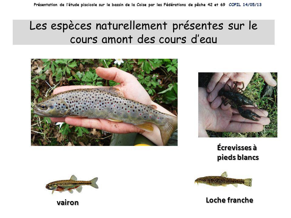 Truite fario vairon Loche franche Écrevisses à pieds blancs Les espèces naturellement présentes sur le cours amont des cours deau Présentation de létu