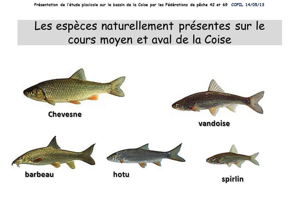 spirlin Chevesne vandoise barbeauhotu Les espèces naturellement présentes sur le cours moyen et aval de la Coise Présentation de létude piscicole sur