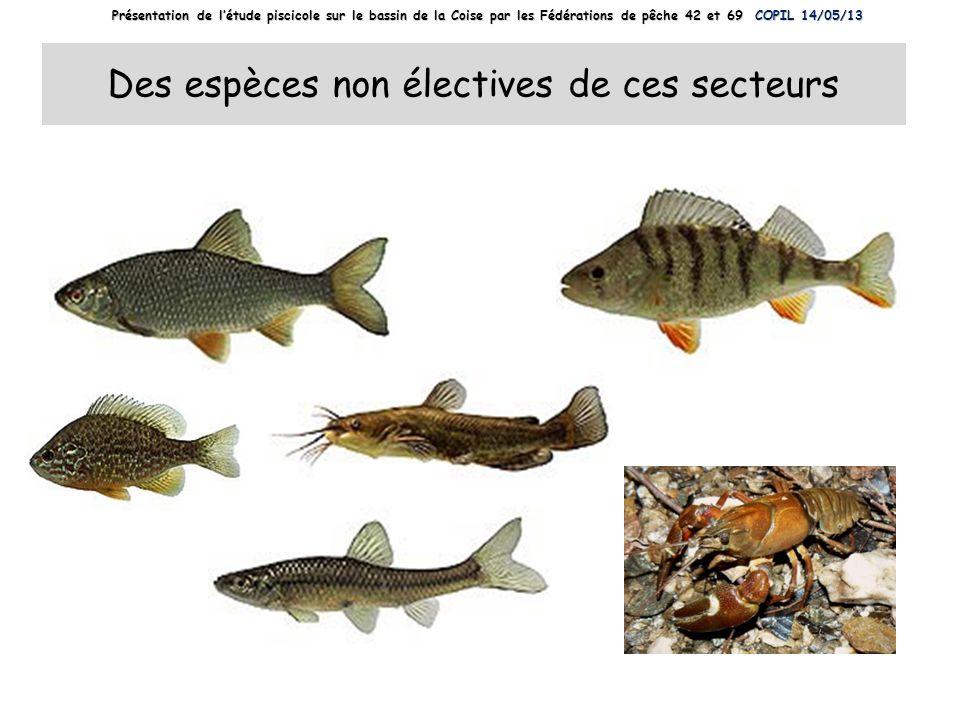 Des espèces non électives de ces secteurs Présentation de létude piscicole sur le bassin de la Coise par les Fédérations de pêche 42 et 69 COPIL 14/05